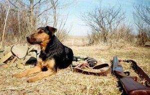 Сроки весенней охоты 2015